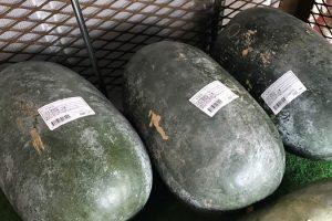 7〜8kg級の冬瓜