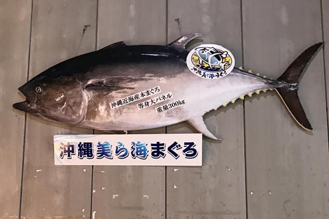 沖縄美ら海まぐろ